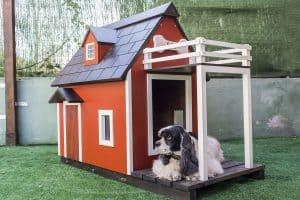 מבנה לכלב